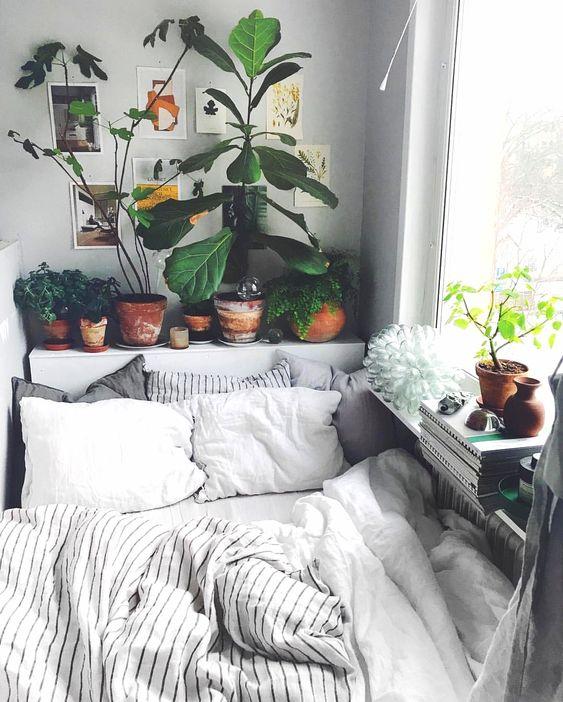 plantes2